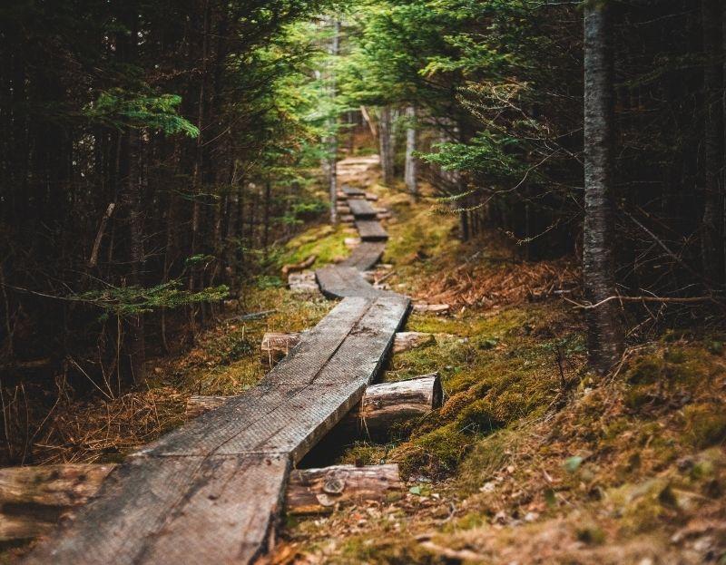 instituto tiê e o caminho da sustentabilidade autêntica